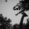NIKON NIKON D70で撮影したインテリア・オブジェクト(キリン発見)の写真(画像)