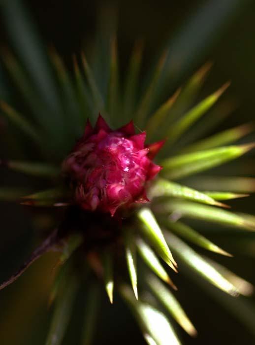 トゲのある花