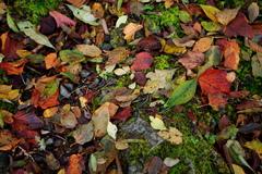 秋の散歩道