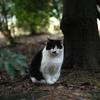 新宿御苑の猫