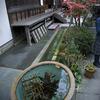 報国寺の金魚鉢