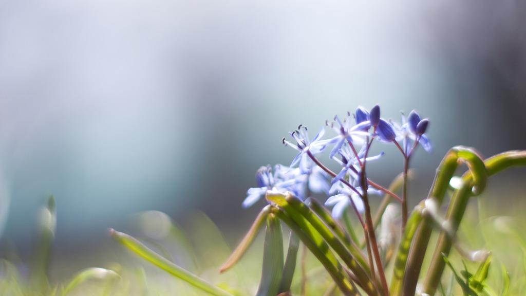 目覚めて、春