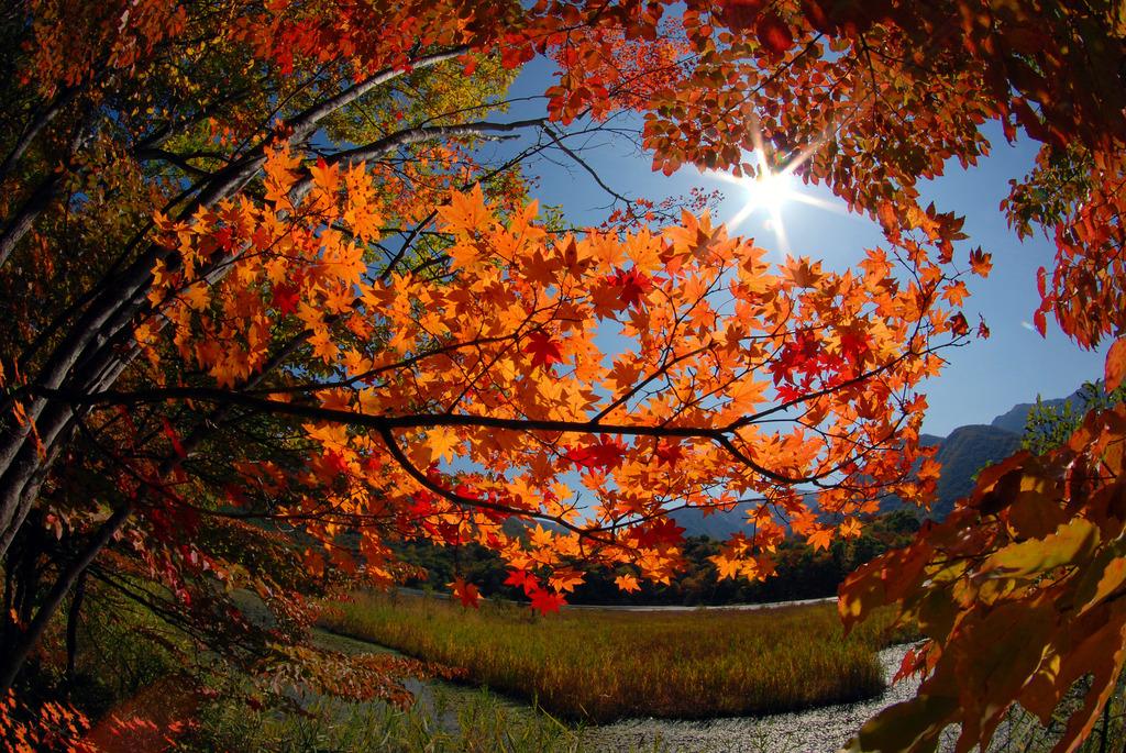 紅葉シーズン始まり