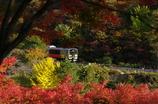 秋カラーで秋を行く