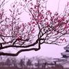 紅梅小峰城