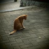 200908191常盤公園猫3