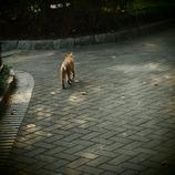 200908191常盤公園猫