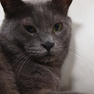OLYMPUS E-P1で撮影した動物(20090823ぐり14)の写真(画像)