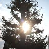 20090824木漏れ日