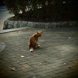 200908191常盤公園猫2