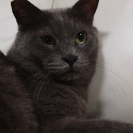 OLYMPUS E-P1で撮影した動物(20090823ぐり13)の写真(画像)