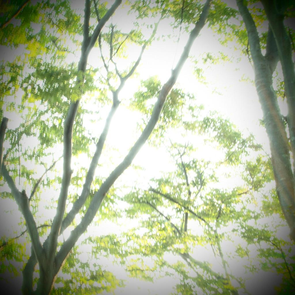 20090817東新田公園