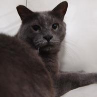 OLYMPUS E-P1で撮影した動物(20090823ぐり12)の写真(画像)