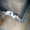 遺跡の中で涼む猫