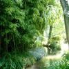 フランス風竹林