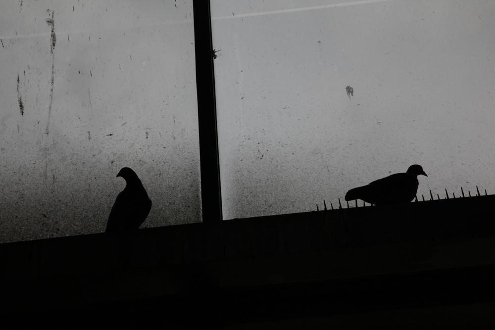 鳩のいる風景