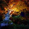 秋夜を彩る