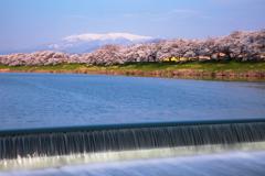 蔵王連峰と白石川堤一目千本桜
