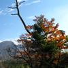 秋の空と木