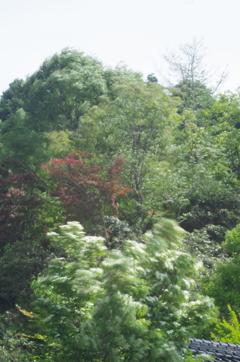 揺れる木々