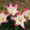 庭に咲く花 Vol.93