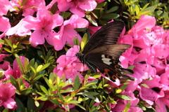 庭に咲く花 番外 蝶VOL.3