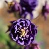庭に咲く花 Vol.3