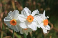 庭に咲く花 Vol.24
