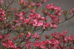 庭に咲く花 VOL.30