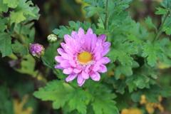 庭に咲く花 Vol.147