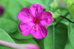 庭に咲く花 Vol.122