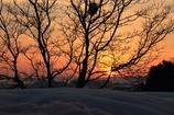 埋もる木と夕日