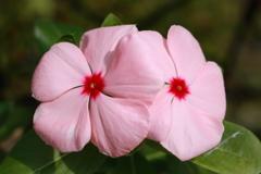 庭に咲く花 Vol.123