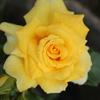 庭に咲く花 Vol.70