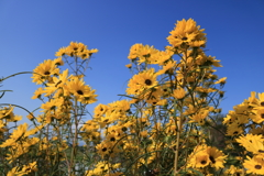庭に咲く花 Vol.142
