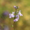 庭に咲く花 Vol.55