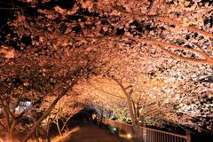 河津夜桜 vol.1