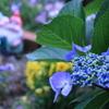 庭に咲く花 Vol.103