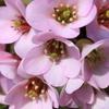 庭に咲く花 Vol.1