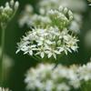 庭に咲く花 Vol.131