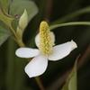 庭に咲く花 Vol.80
