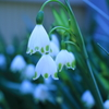 庭に咲く花 Vol.31