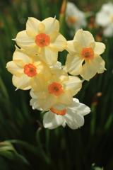 庭に咲く花 Vol.26