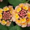 庭に咲く花 Vol.130