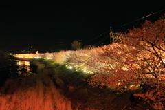 河津夜桜 vol.2