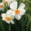 庭に咲く花 Vol.27