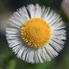 庭に咲く花 Vol.57
