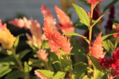庭に咲く花 Vol.139