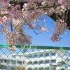 春だ!桜だ!入学祭り