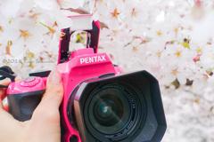 ピンク桜とピンクボディ